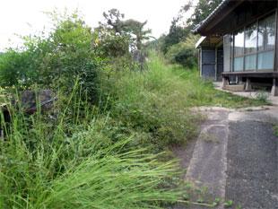 空き家周辺 除草前
